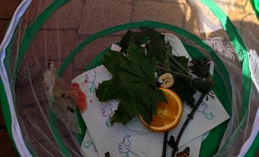 Unser Schmetterlingsprojekt - Klasse 2a_2