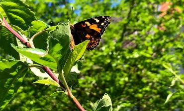 Unser Schmetterlingsprojekt - Klasse 2a_3
