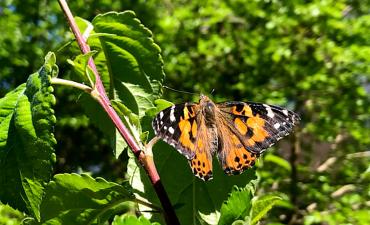 Unser Schmetterlingsprojekt - Klasse 2a_4