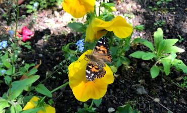 Unser Schmetterlingsprojekt - Klasse 2a_5