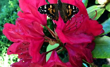 Unser Schmetterlingsprojekt - Klasse 2a_6