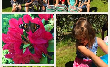 Unser Schmetterlingsprojekt - Klasse 2a_7